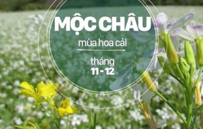 moc-chau2