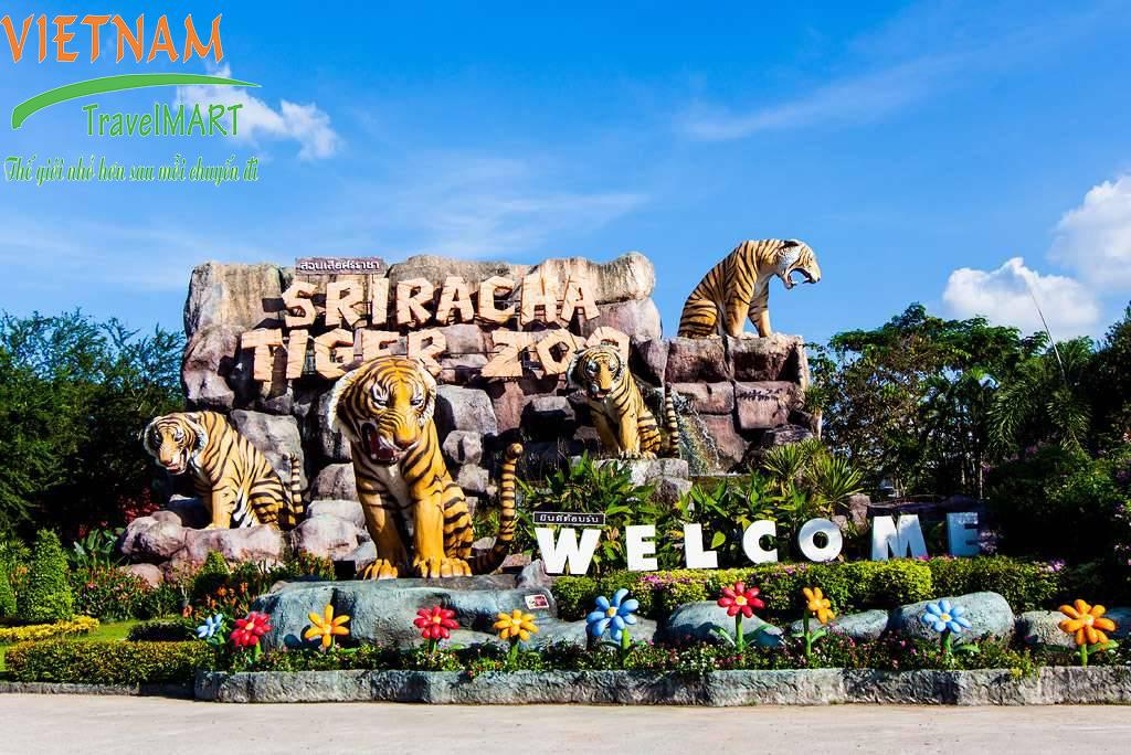 Trại hổ Sriracha - Tiger Zoo