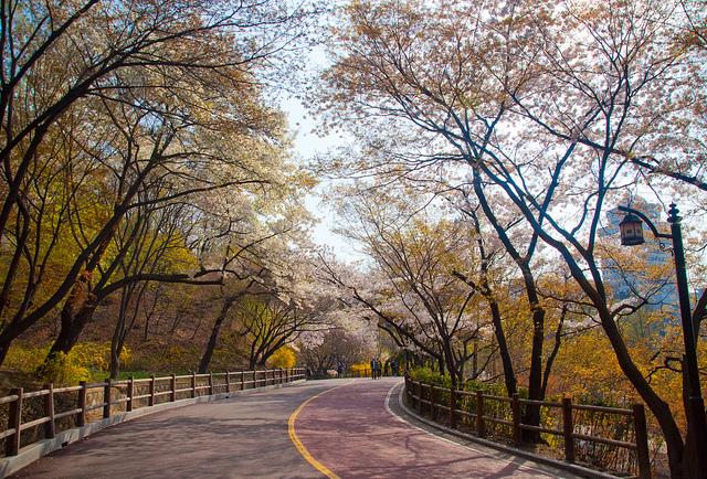 Cung đường tại công viên Namsan vào mùa thu