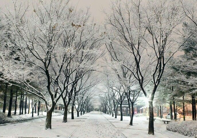 Công viên Namsan vào mùa Đông đầy lãng mạn