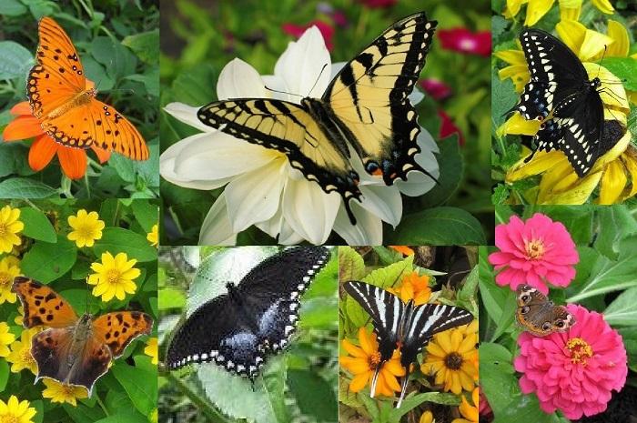 Vườn bướm Bangkok